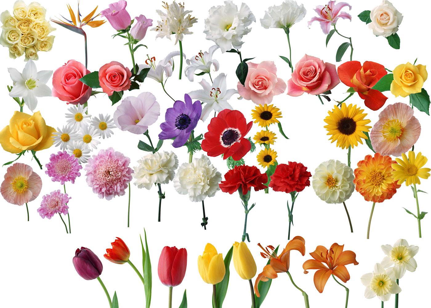 Клипарт цветов для фото